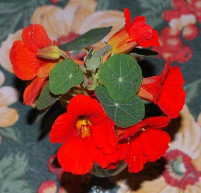 edible-flowers1