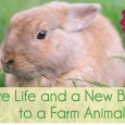 We just received this and would like to pass it on to you… This Easter, Parents Urged to Sponsor an Animal in Need for Their Children, Not Buy One Watkins […]