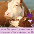 We just received this press release we would like to share with you… This Mother's Day, Farm Sanctuary Encourages Public to Honor Mothers of All Species Nation's Leading Farm Animal […]