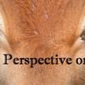 Bruno Happy Cow Perspectives