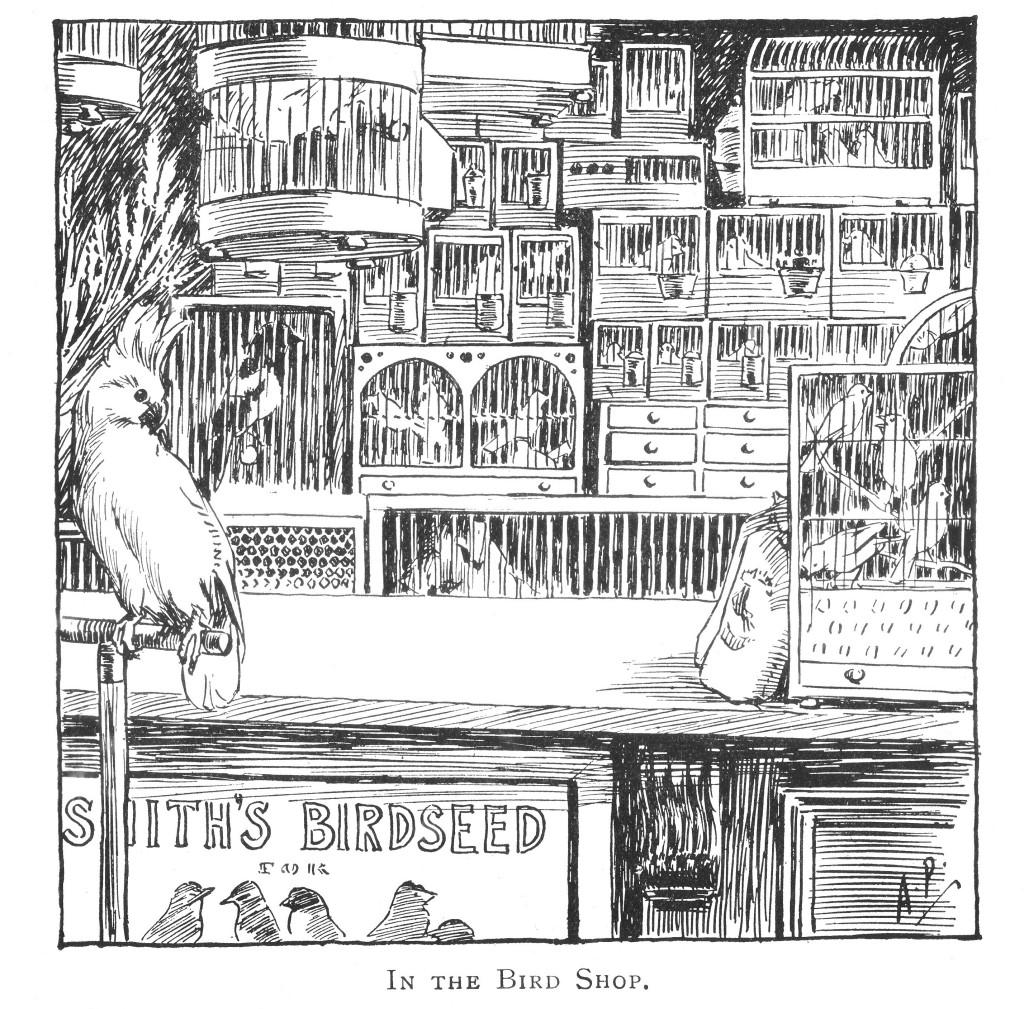 In the bird shop