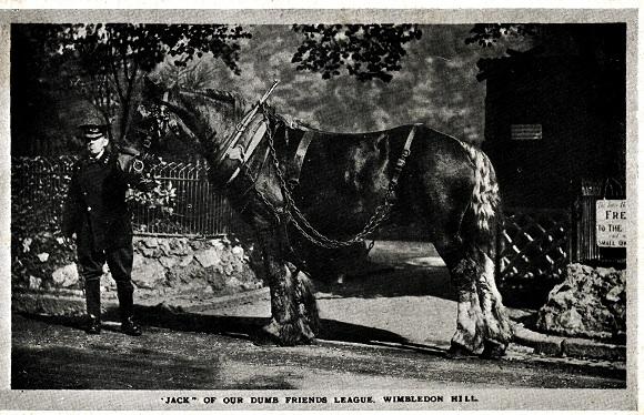 Horse-jack-of-our-dumb-friend-league_0001