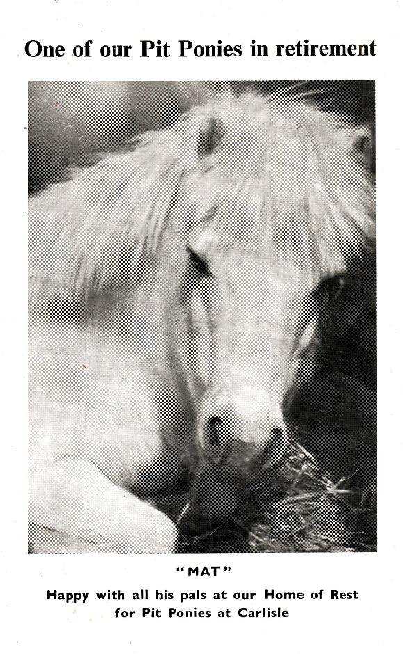horse-mat
