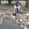 Video: Rabbit Island In Japan