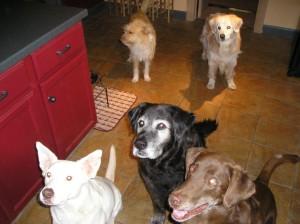 Vegan Dog Treat Recipe