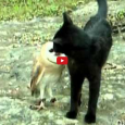 This is the perfect dose of cuteness + distraction to get you through the rest of the day. So take a break and enjoy this adorable video featuring an unlikely […]