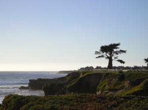 vegan santa cruz monterey california