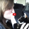 Cats and Dogs Who Hate Kisses