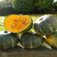 So, I have a new favorite squash. Kabocha. Man is it good. It's a squash for non-squash lovers. If you have been on the fence about squash, or downright just […]