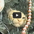 We wish you a great holiday season full of cuddly cats in Christmas trees!