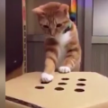Cat Playing Whack-A-Mole