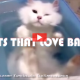 These cats must have gotten the word that the weekend is here, because they've already started relaxing! Have you ever seen a cat that loved water? Well, in this adorable […]