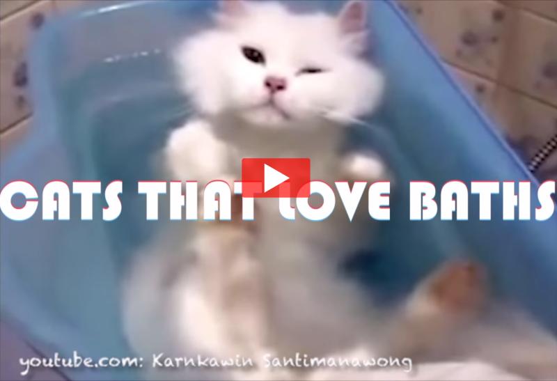 Cats That Love Baths
