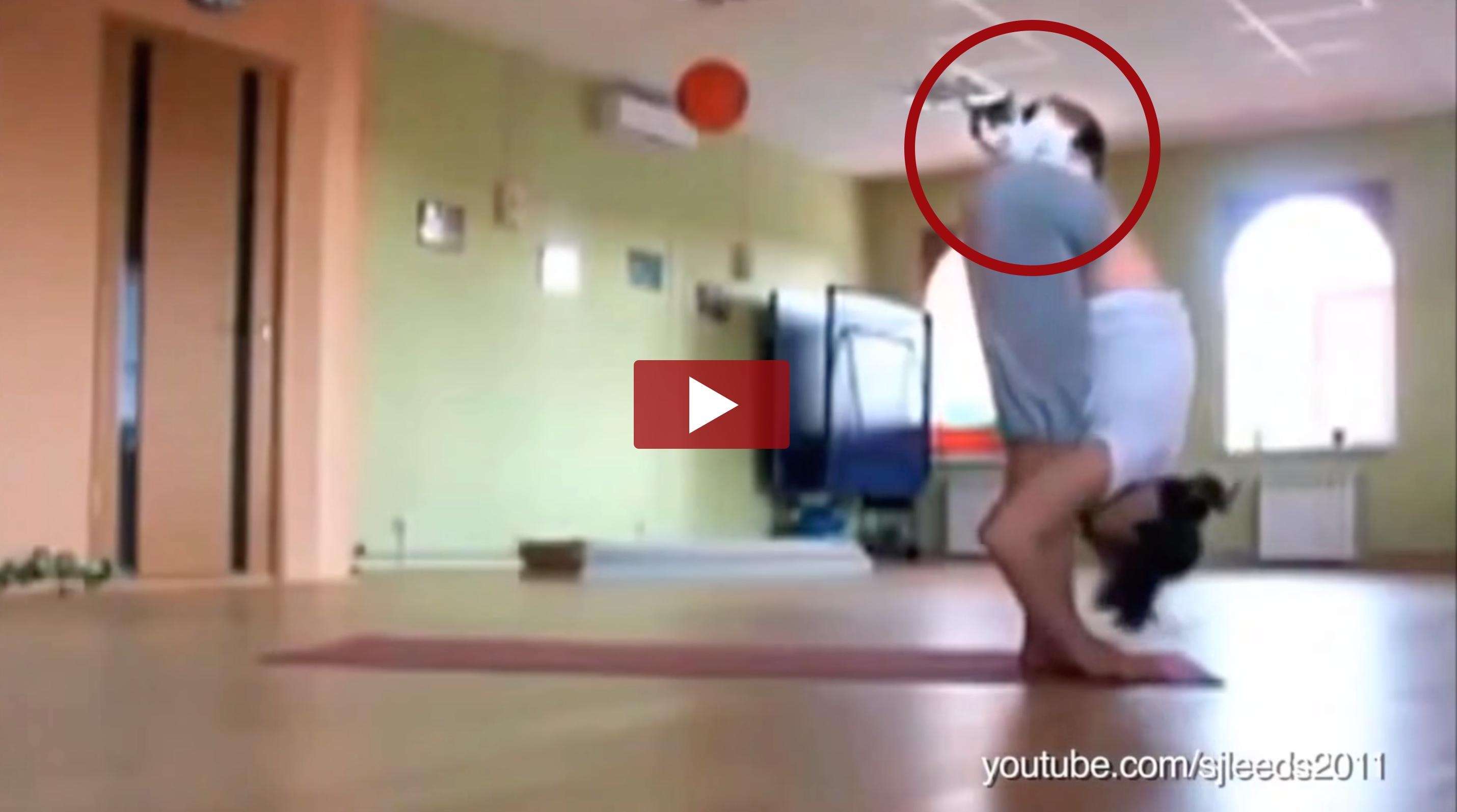 Animals Interrupting Yoga