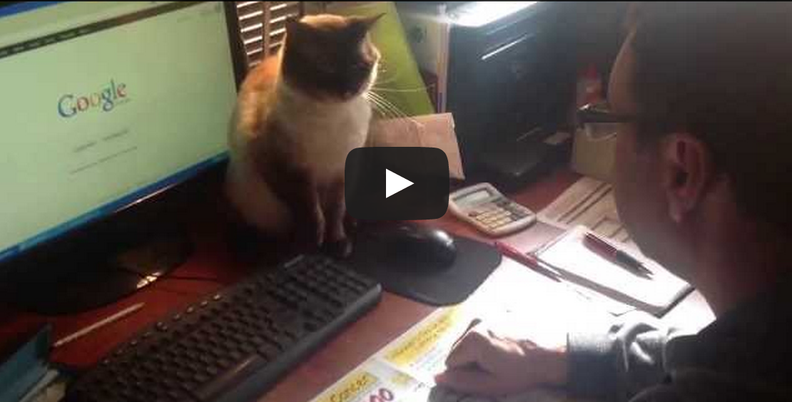 Cat Fights For Computer Mouse