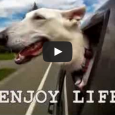 This video is sure to give you a smile today, and everything in it is so true—dogs really do teach us so much What have dogs taught you? Tell us […]