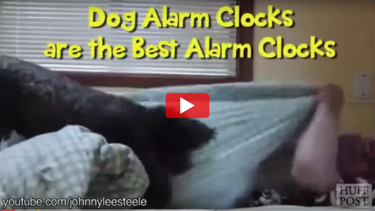 VIDEO: Dog Alarm Clocks