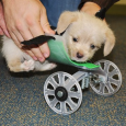 Tumbles, a six-week-old Terrier, was born without his two front legs but that never stopped him.And now technicians at the Ohio University Innovation Center have stepped in to build him […]