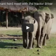 Kham La is a 5-year-old rescue elephant living at Elephant Nature Park in Thailand. Her favorite person at the nature park is a tractor driver named Darrick, and every morning when Darrick makes his rounds, […]