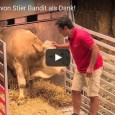 Bandit the bull was tethered in a narrow stable for most of his life. When the wonderful folks at Gut Aiderbichl Sanctuary (home to 500 rescued cows, bulls, and calves) […]