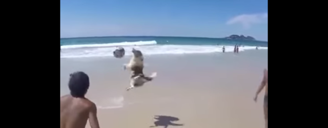 This pooch is basically showing everyone up with his soccer skills at the beach..and we are impressed!