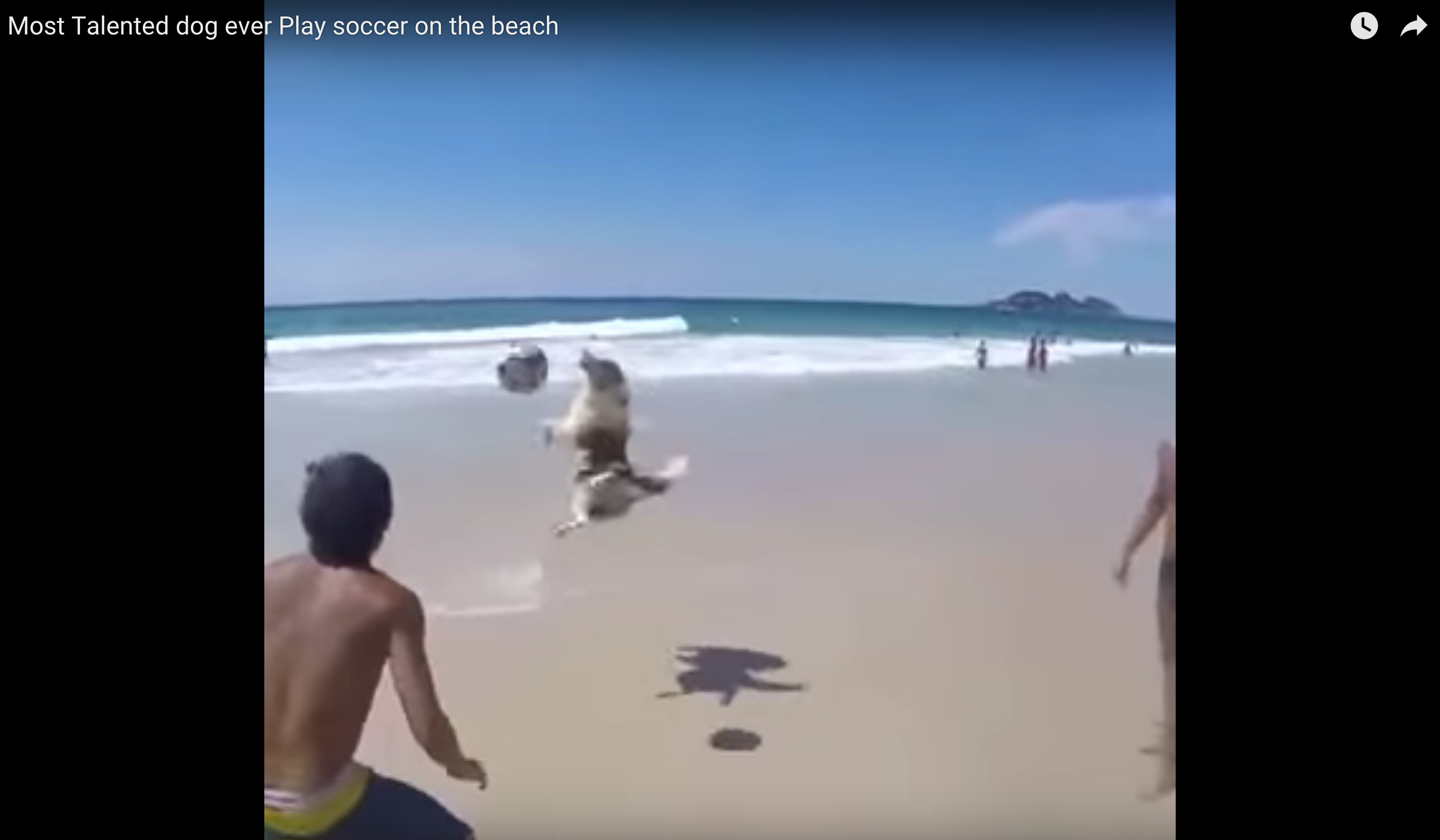 Dog Shows Off Soccer Skills At Beach
