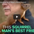 Tadeusz Lubiarz found this squirrel, which he named Pitek, when he was near death and nursed him back to health. Now the two are inseparable!