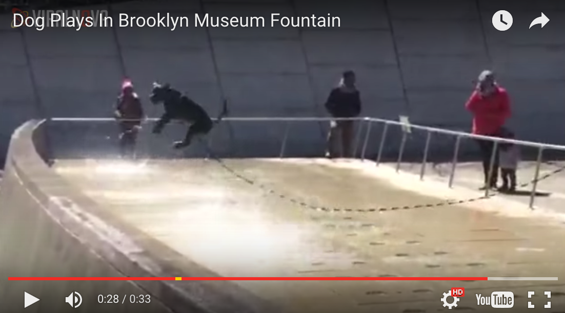 Dog Plays In Brooklyn Museum Fountain