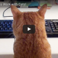 This video is for anyone out there who knows what it's like to work with cats — it's the best! What's your feline friend's favorite thing to do while you're […]