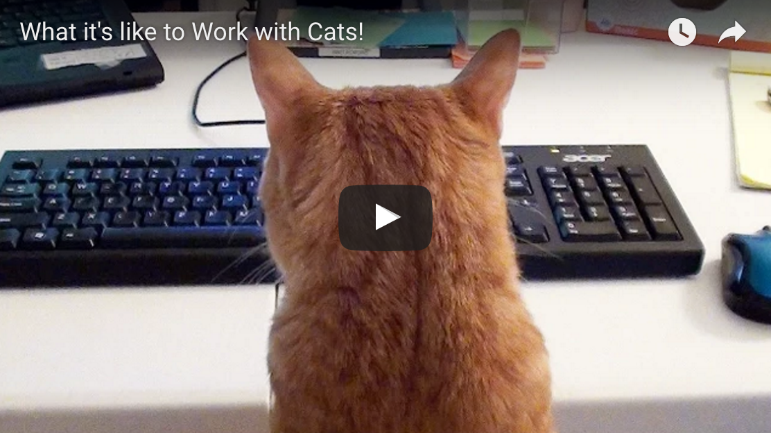 What It's Like To Work With Cats