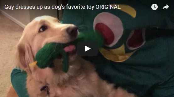 dogs-favorite-toy-comes-to-life