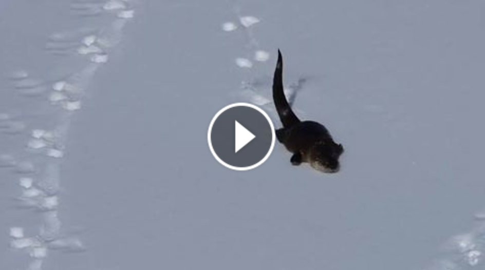 otter slide snow