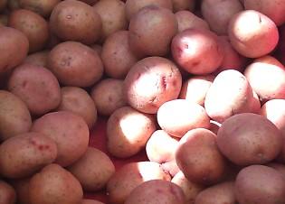 Potato and Cauliflower Curry